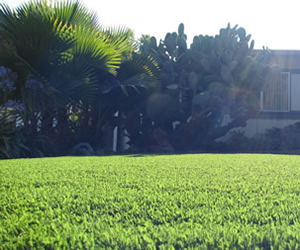 Millbrae synthetic grass