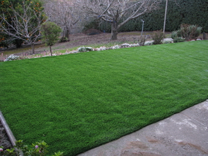 Redwood Estates synthetic grass